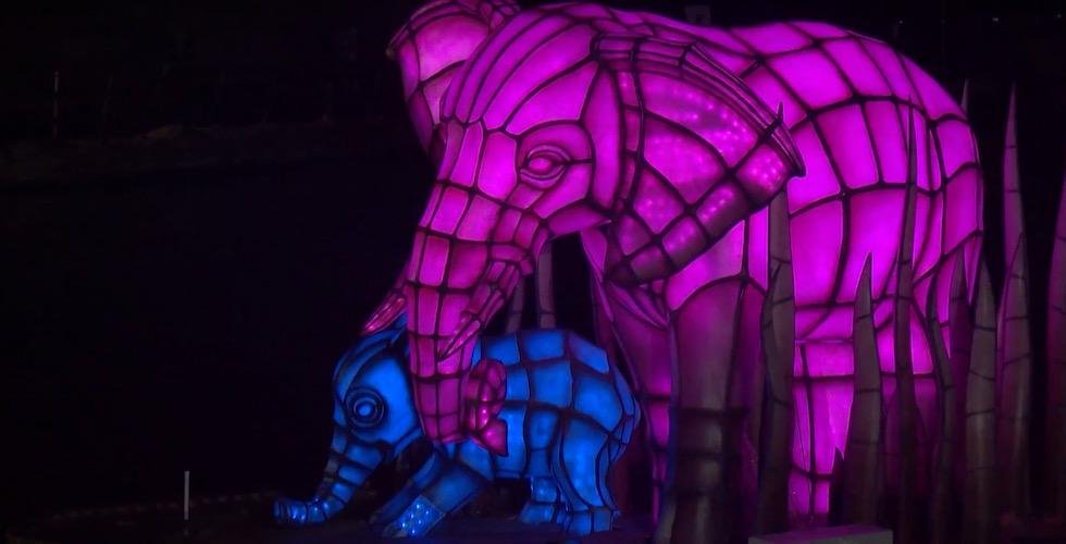 Rivers-of-light-elephants